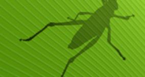 Grasshopper private lessons